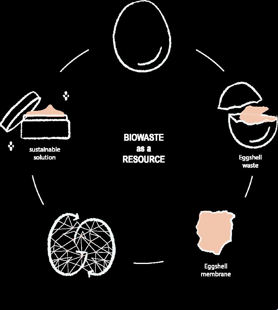circular eggshell waste graphic